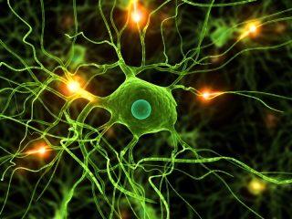 microglia2